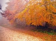 世上最美的秋天林间小路图片电脑桌面壁纸下载第二辑