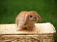 动物壁纸可爱兔子图片大全 可爱的兔子温馨图片高清