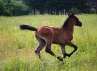 草原上奔驰飞跑的良驹宝马图片 十二生肖马