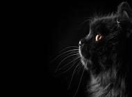 黑猫图片大全 秋天傲慢的黑猫