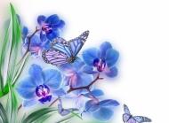 蓝色蝴蝶蝴蝶兰图片素材