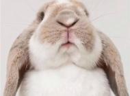 萌萌兔子图片 萌萌可爱小兔子