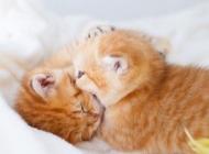 小奶猫图片 谁家的小奶
