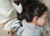 小萝莉与柴犬的故事图片