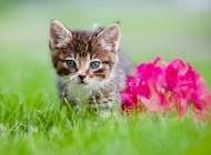 草地上的兔子图片 草地
