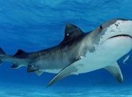 深海狂鲨图片大全,鲨鱼图