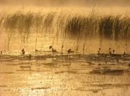 幸福意境金色池塘图片