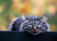 8张猫咪写真