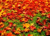 离别的秋天孤寂落叶唯美