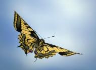 漂亮的蝴蝶宽屏高清电脑壁纸