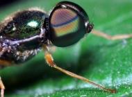 距下的苍蝇高清图片大全