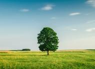 绿色草地天空高清风景电脑壁纸