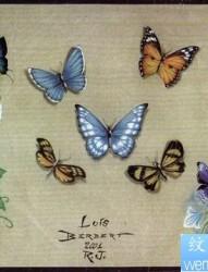 纹身图片:蝴蝶纹身图片图案