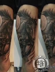 腿部流行很酷的骏马纹身图片