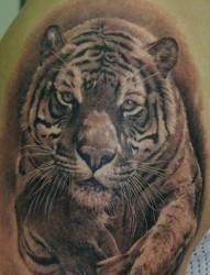大臂老虎纹身图片