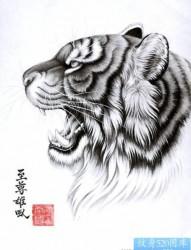 老虎纹身图片:老虎纹身图片纹身作品