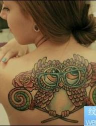 女性背部彩色个性猫头鹰纹身图案