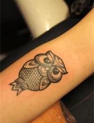 呆萌可爱的猫头鹰纹身