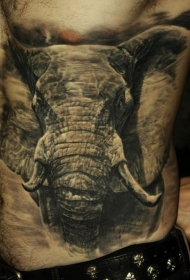 非常逼真的大象侧肋纹身图案