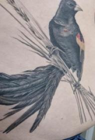 腹部纹身 男生腹部黑色的小鸟纹身图片