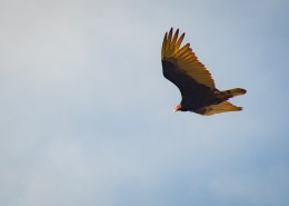 空中的飞鸟图片(11张)