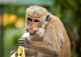 调皮可爱的猴子图片(11张)