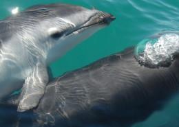 水中的海豚图片(10张)