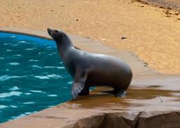 一只可爱的海狮图片(14张)