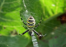 一只蜘蛛高清图片(15张)