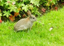可爱呆萌的兔子图片(15张)