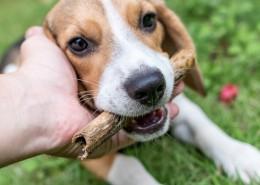 忠实的狗狗图片(11张)