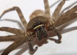 蜘蛛微距图片(12张)