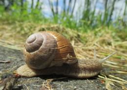 蜗牛高清图片(14张)