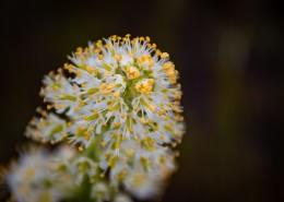 野外的花朵图片(12张)
