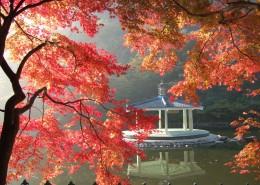 秋季唯美枫叶图片(12张)