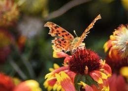 漂亮的斑点蝴蝶图片(10张)