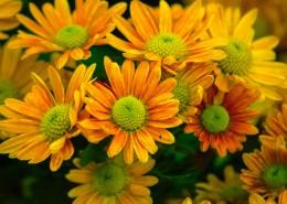 绽放的花朵图片(12张)