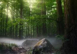 幽静的树林图片(10张)