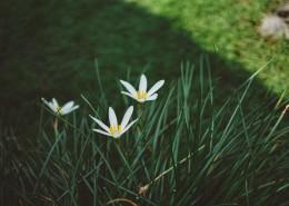淡雅的野花图片(12张)