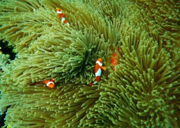 海里的珊瑚图片(11张)