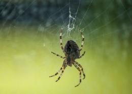 蛛网上的蜘蛛图片(12张)