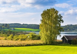绿油油的自然风景图片(13张)