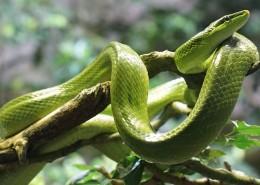 冰冷危险的毒蛇图片(15张)