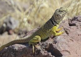 敏捷的蜥蜴图片(12张)