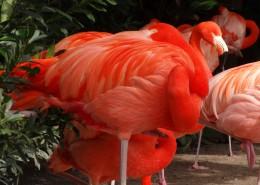 羽毛鲜艳的火烈鸟图片(12张)
