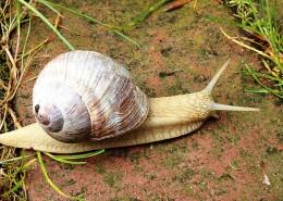 爬行的蜗牛图片(12张)