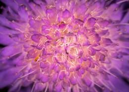 微距拍摄的花朵图片(10张)