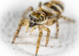 微距拍摄的蜘蛛图片(12张)