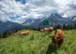 瑞士阿尔卑斯山风景图片(8张)