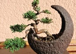 枝展叶舒的盆景图片(14张)